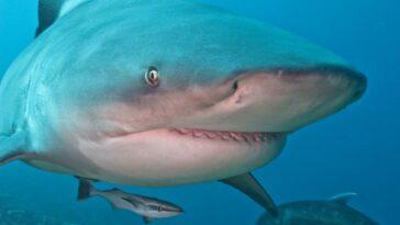 attacco-squalo