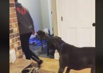 cane imita uomo