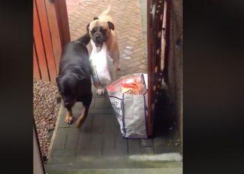 cane-che-aiuta-con-la-spesa