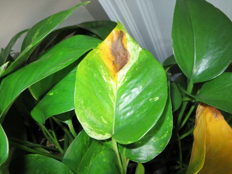Le tue piante hanno le foglie gialle o secche? 5 consigli ...