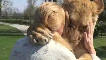leoni abbracciano donna
