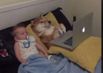 bambino-cane-tv