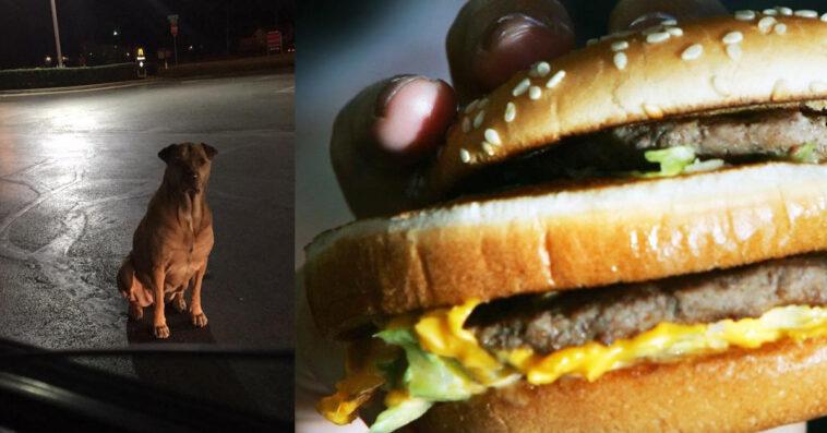 Cane finge di essere un randagio per avere gli hamburger / FOTO