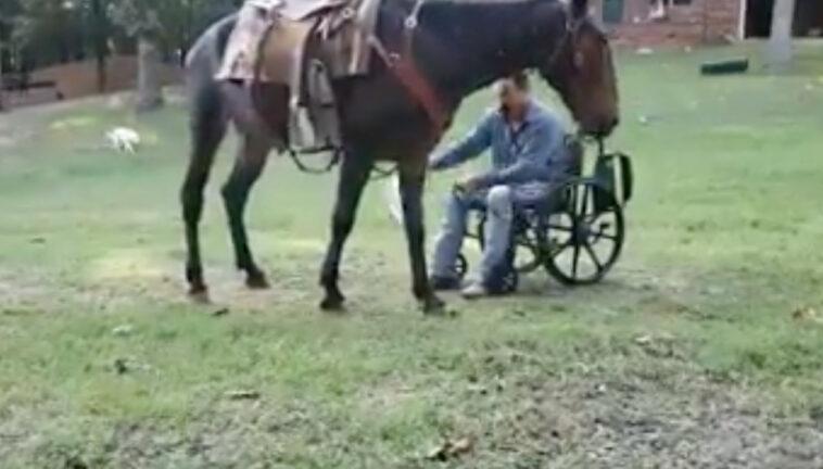 cavallo-uomo