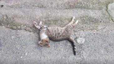 gatti-sciacca