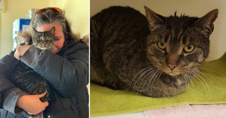 Gatto esce di casa per una passeggiata e torna dopo 5 anni