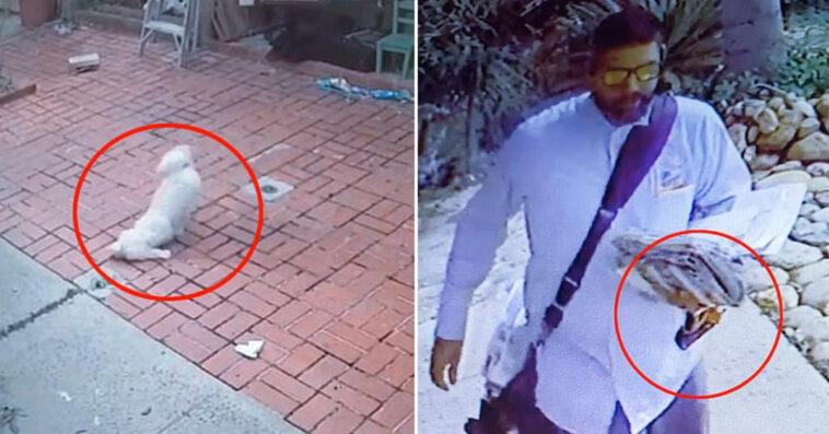 """78fe4c2848 """"Per mesi il postino ha spruzzato spray al peperoncino sul mio cane"""" / VIDEO"""