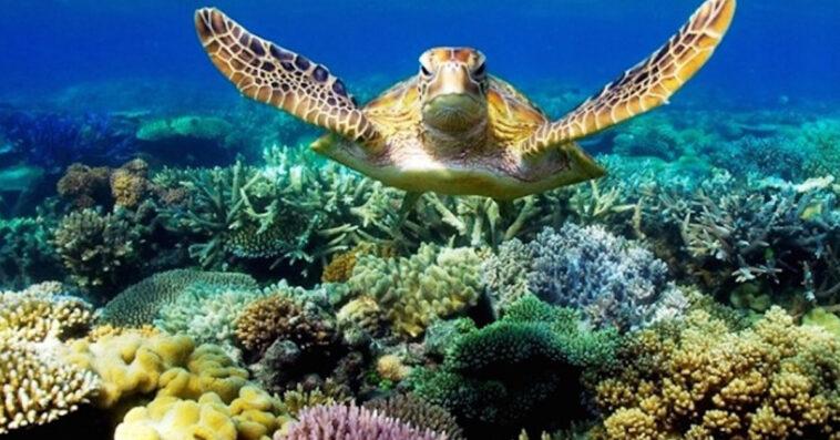 barriera-corallina-puglia