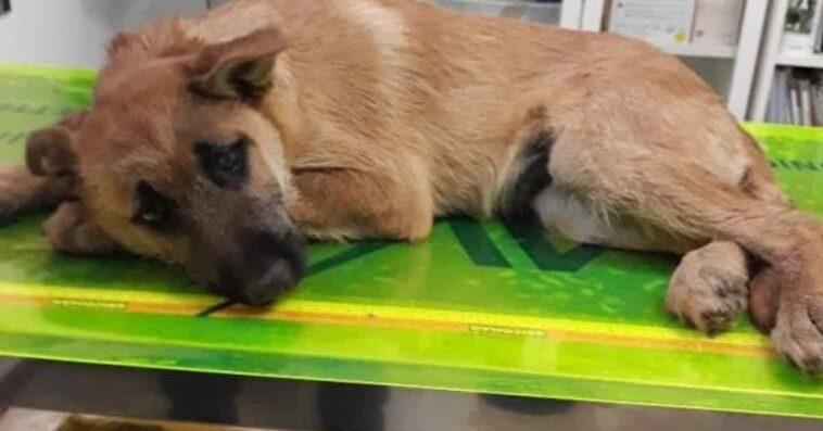 Cucciolo di 3 mesi chiuso in sacco e abbandonato tra i rifiuti