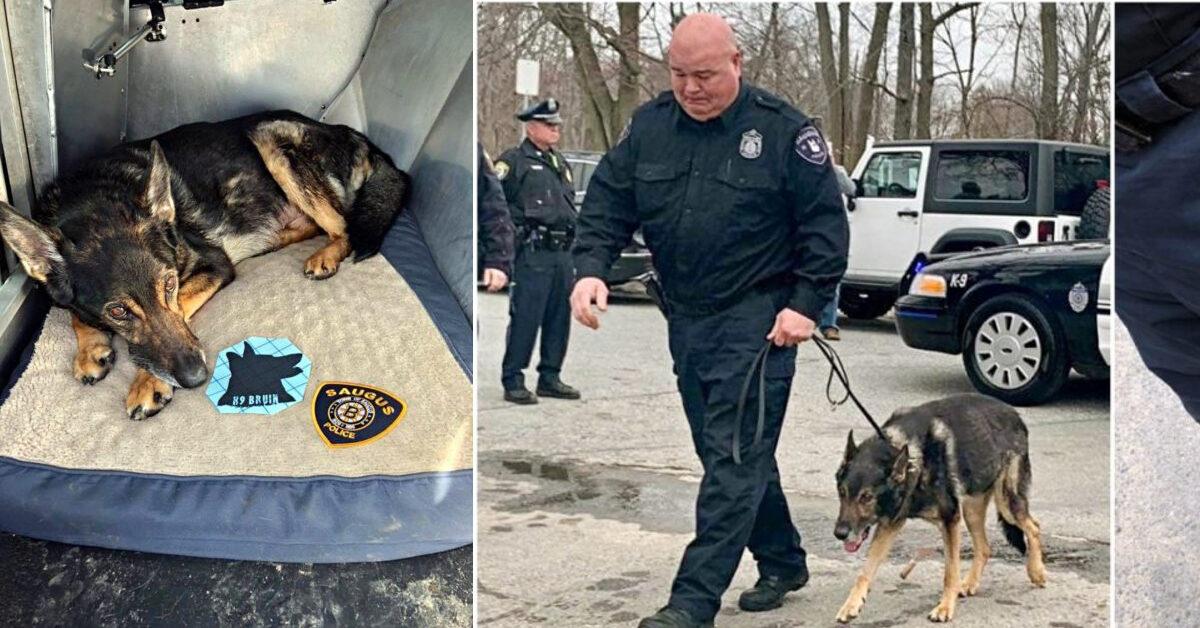 Cane poliziotto ha un cancro terminale, l'intera città gli rende omaggio con la sua ultima passeggiata