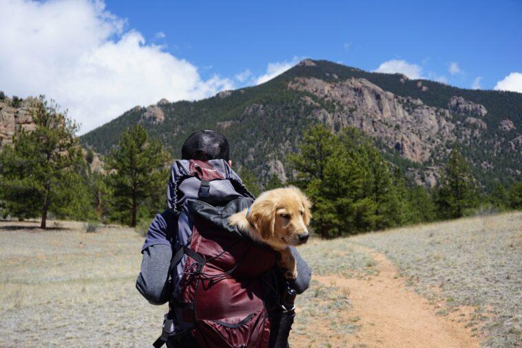 Amore a 4 zampe: come trasferirsi dall'altra parte del mondo con il proprio animale domestico