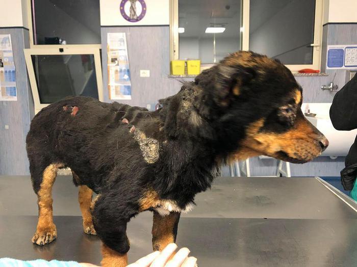 Cane torturato in Sardegna