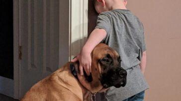 bambino in punizione il cane lo consola