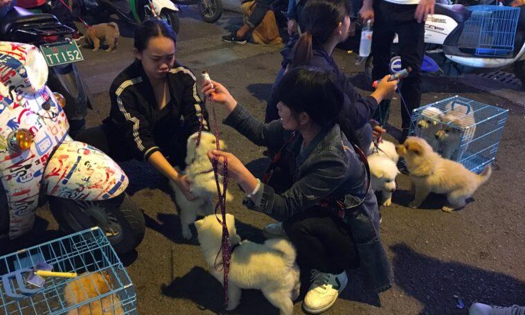 Cina, cani e gatti gettati dalle finestre per la psicosi del contagio da coronavirus
