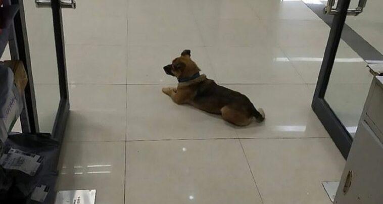 Cane fedele aspetta proprietario