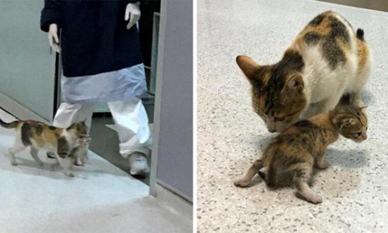 mamma gatta va in ospedale
