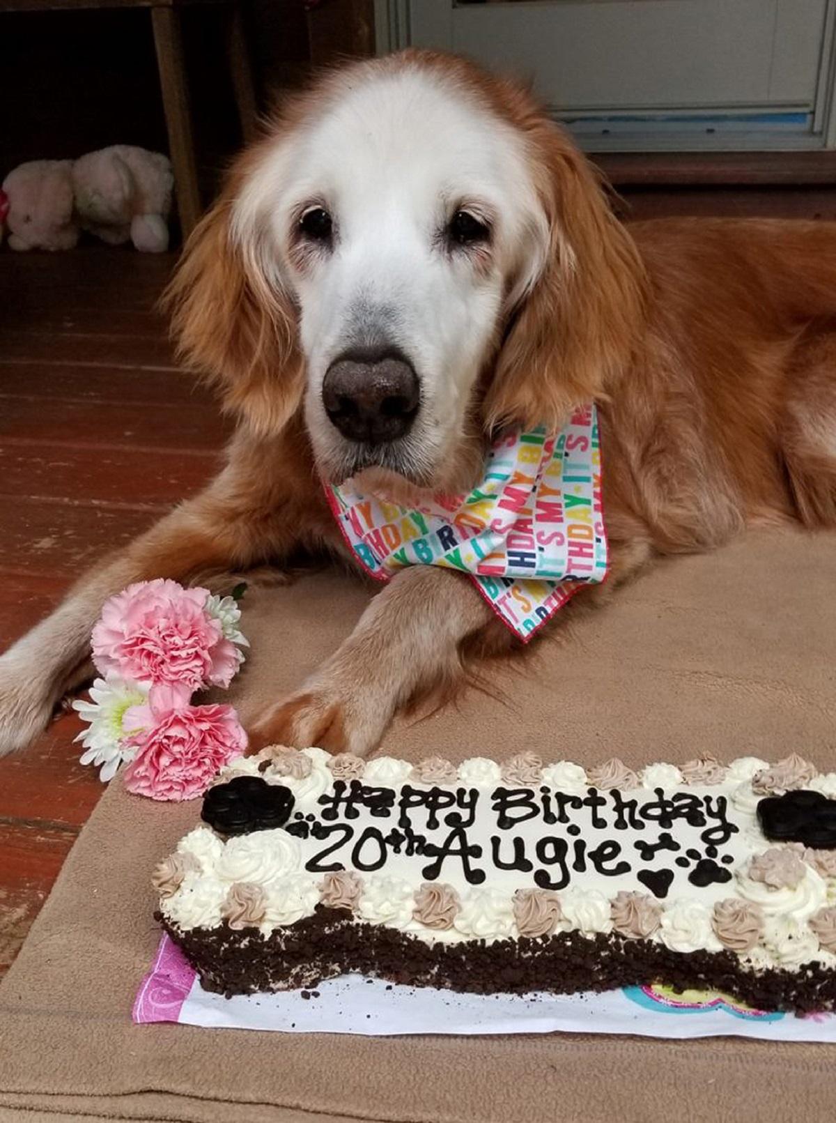 Cane festeggia 20 anni
