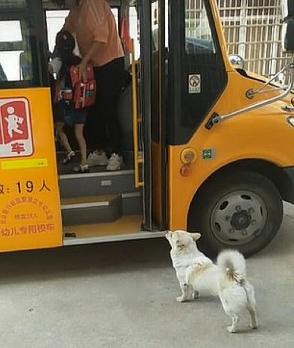 cane fedele