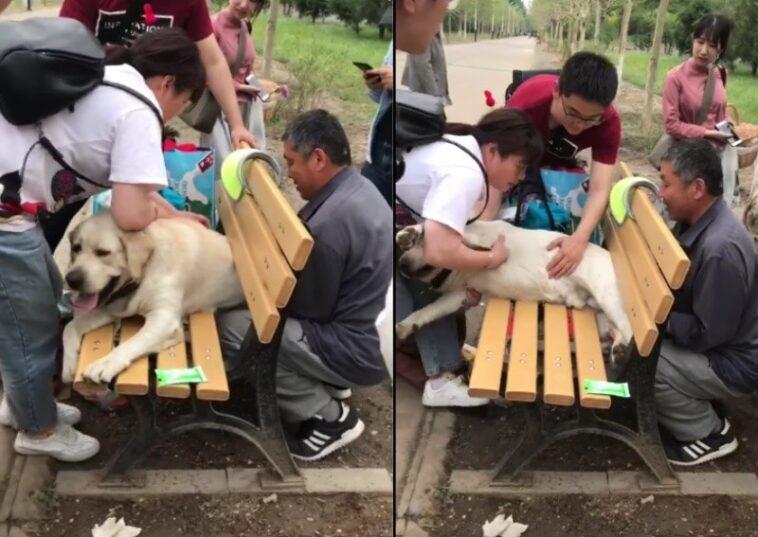 cane poliziotto incastrato panchina