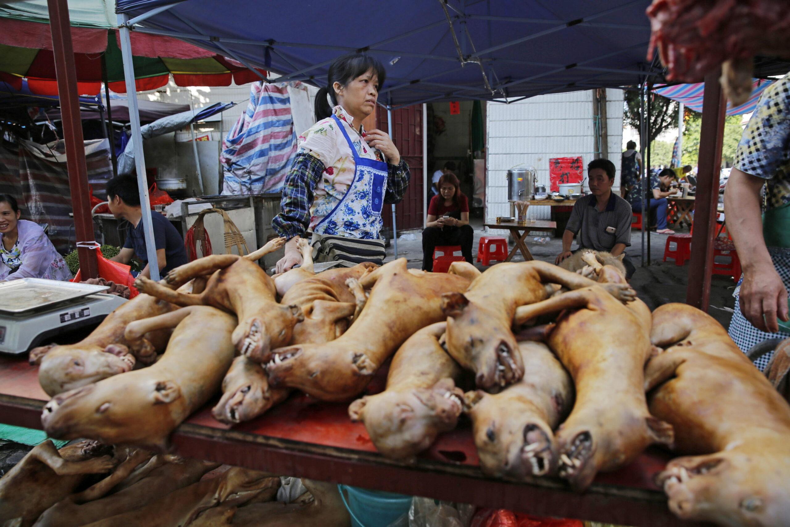commercio di carne di cane in cina