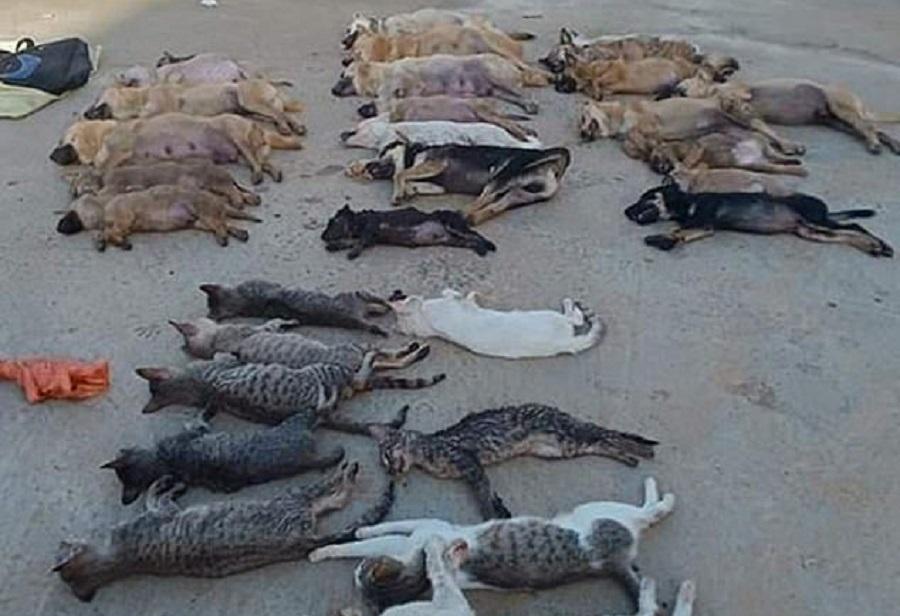 cani e gatti avvelenati