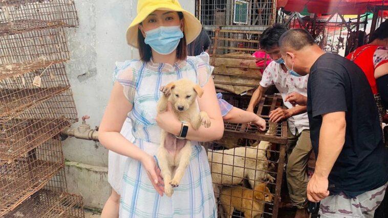 crolla il commercio di carne di cane