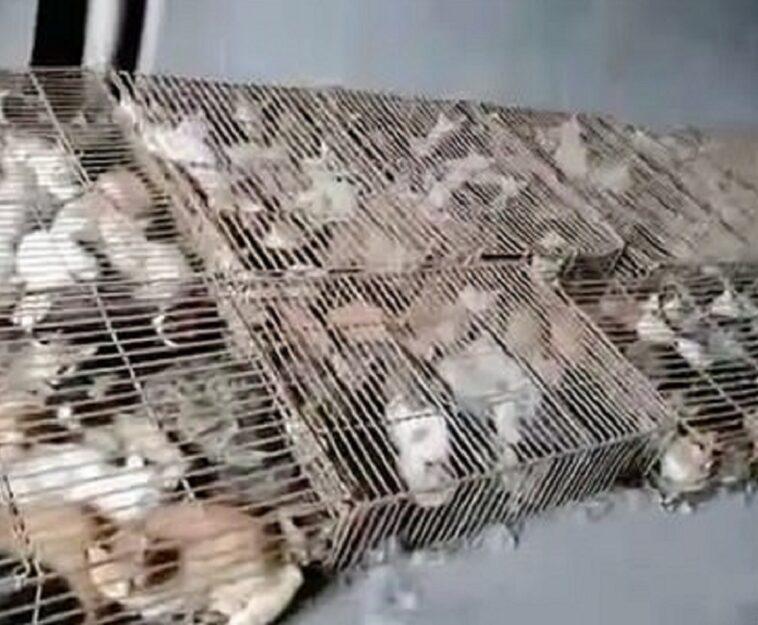 gatti ammassati in gabbie
