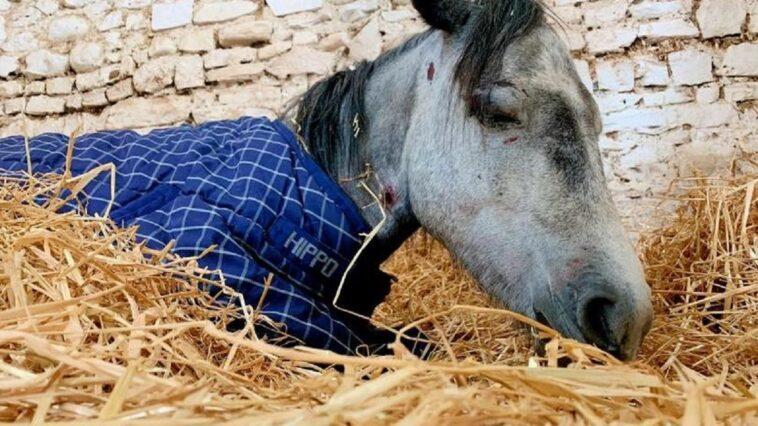 Pony picchiato a morte