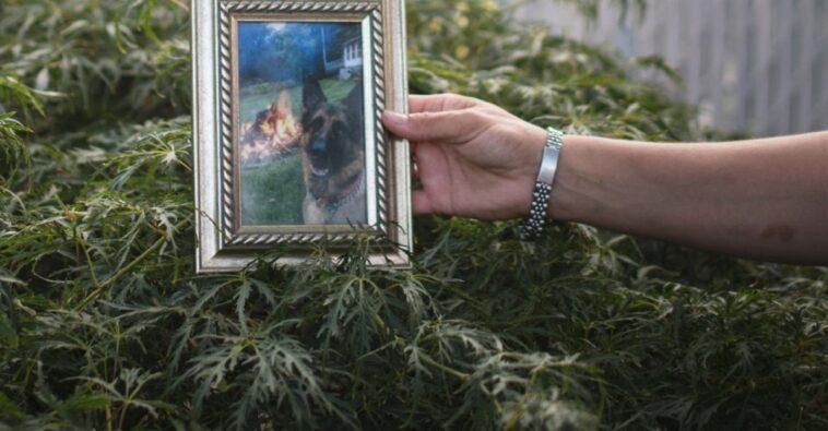 cane vittima covid