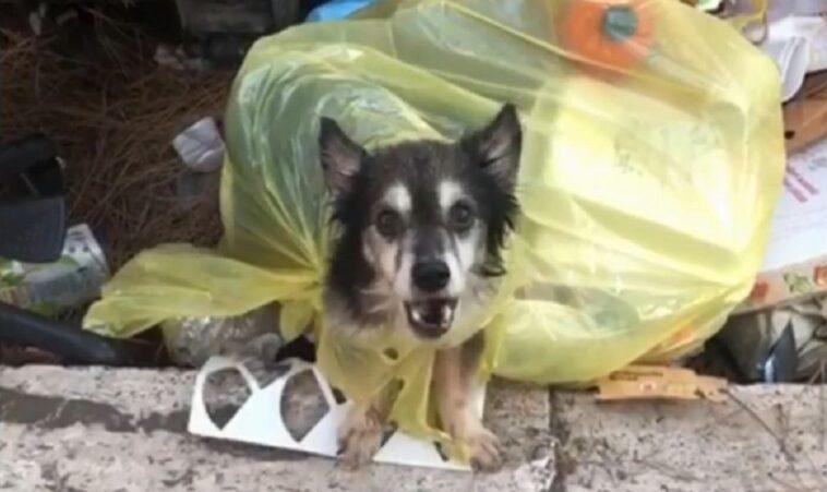 spillo cane nell'immondizia