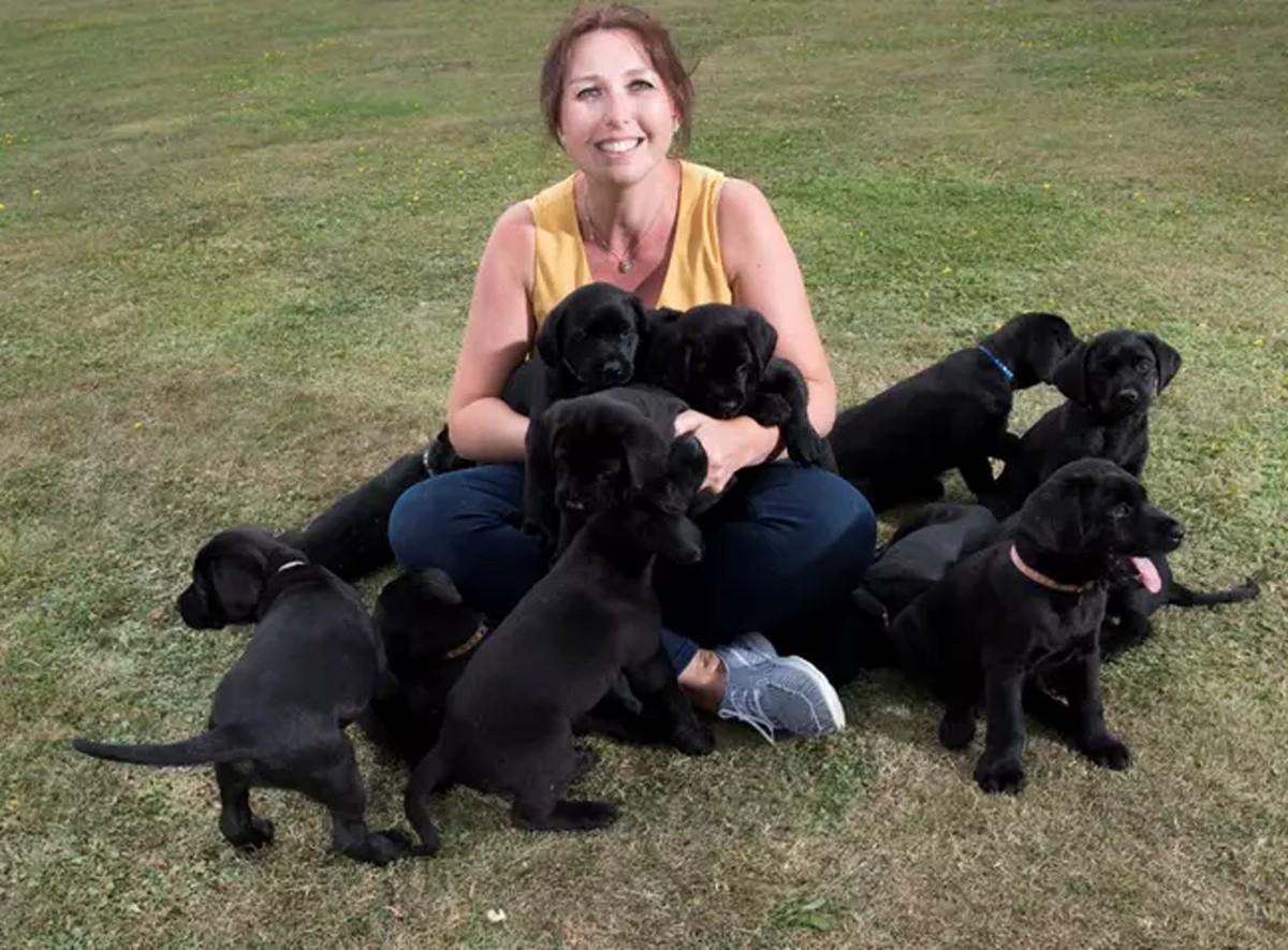 13 cuccioli di Labrador neri