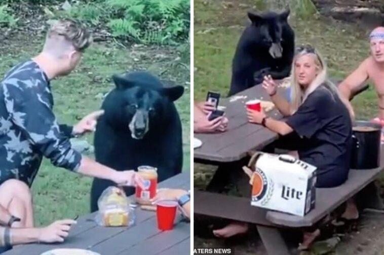 picnic con orso